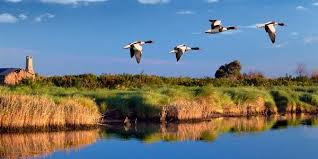 Il Comitato presenta la sua mission e parla dell'azione diretta alla modifica della normativa regionale sullo spandimento dei fanghi per tutelare i territori della Riserva UNESCO.